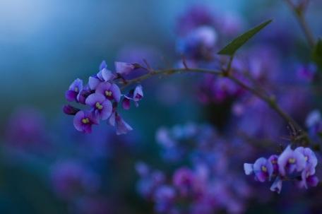 2006-08-19-native-lilac